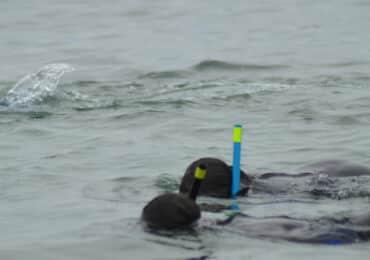 Alquiler equipo snorkel Pontevedra