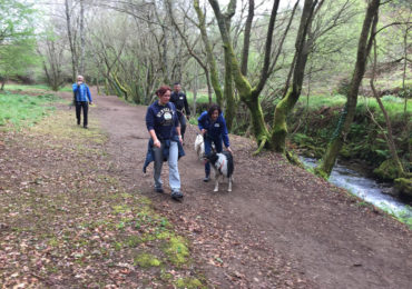 Actividades con perros Galicia