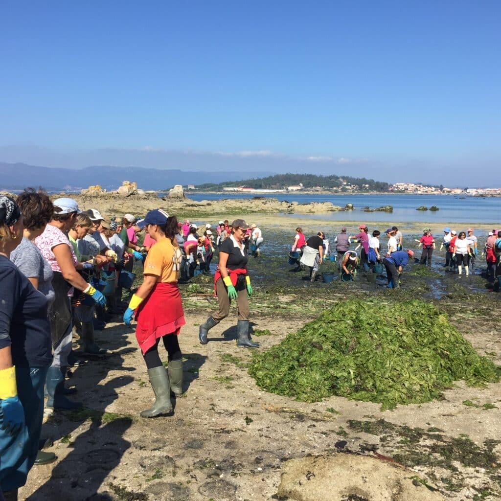 mariscadoras gallegas