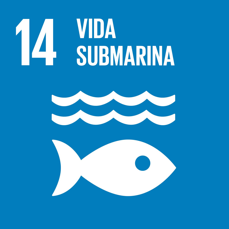 ODS Piragüilla - Vida Submarina
